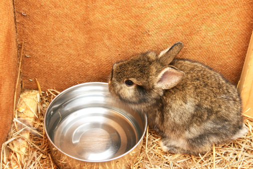 Rabbit Bottle Care Discussion: Water Bottles or a Water Dish?