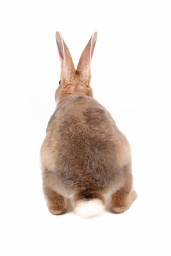 Yuck! How to Keep Your Bunny's Butt Clean