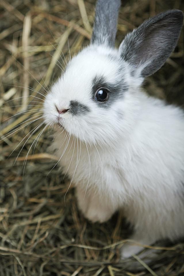 Rabbit Care 101: Feeding Your Rabbit Hay Tips and Tricks