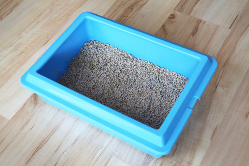 5 Steps to Setting Up Your Litter Box for Rabbits