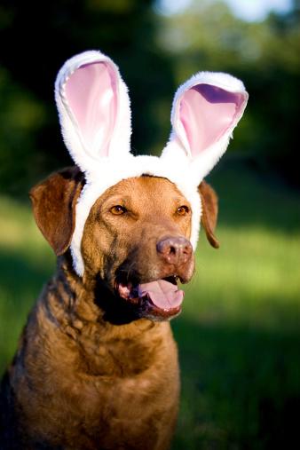 Can You Train a Rabbit Like You Train a Dog?