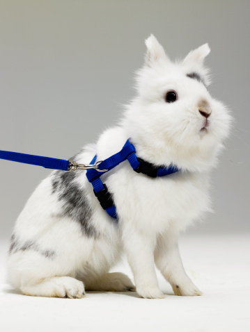 Walking Your Rabbit on a Leash?