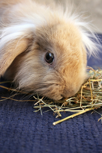 Rabbit Food Basics: What Do Bunnies Eat?