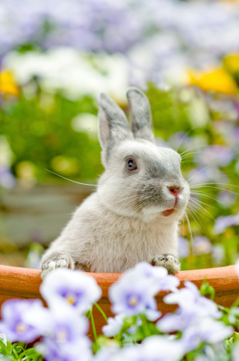 Why Do Rabbits Bite? Could This Be Love?