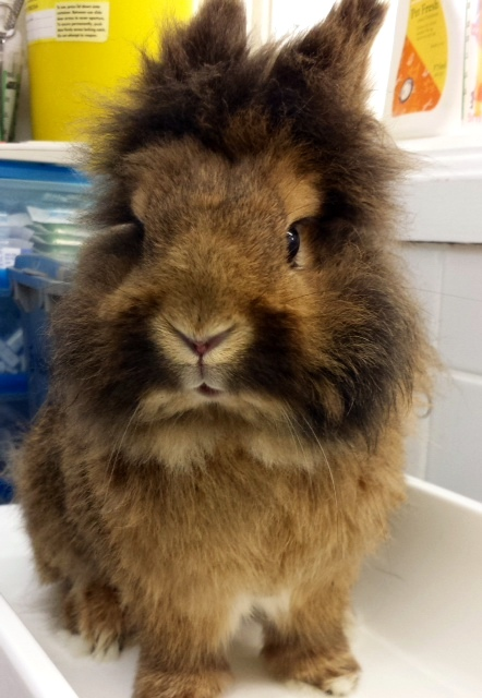 The Tale of a Rabbit's Life: RIP Simba