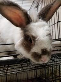 Watertown Humane Society Rabbit