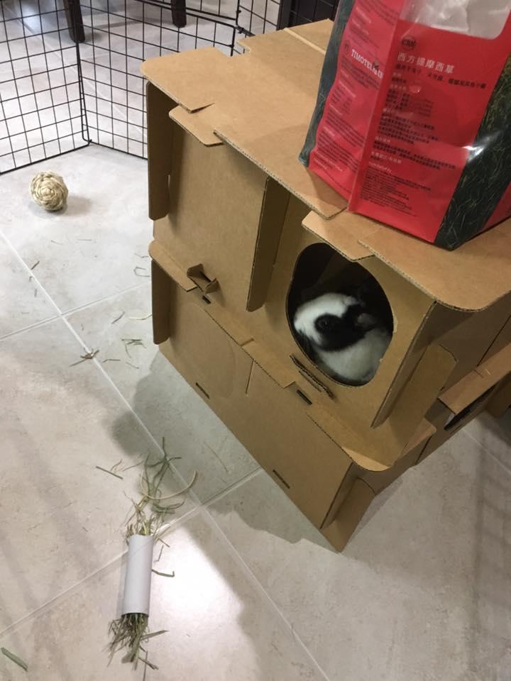 Bunny_in_a_box.jpg