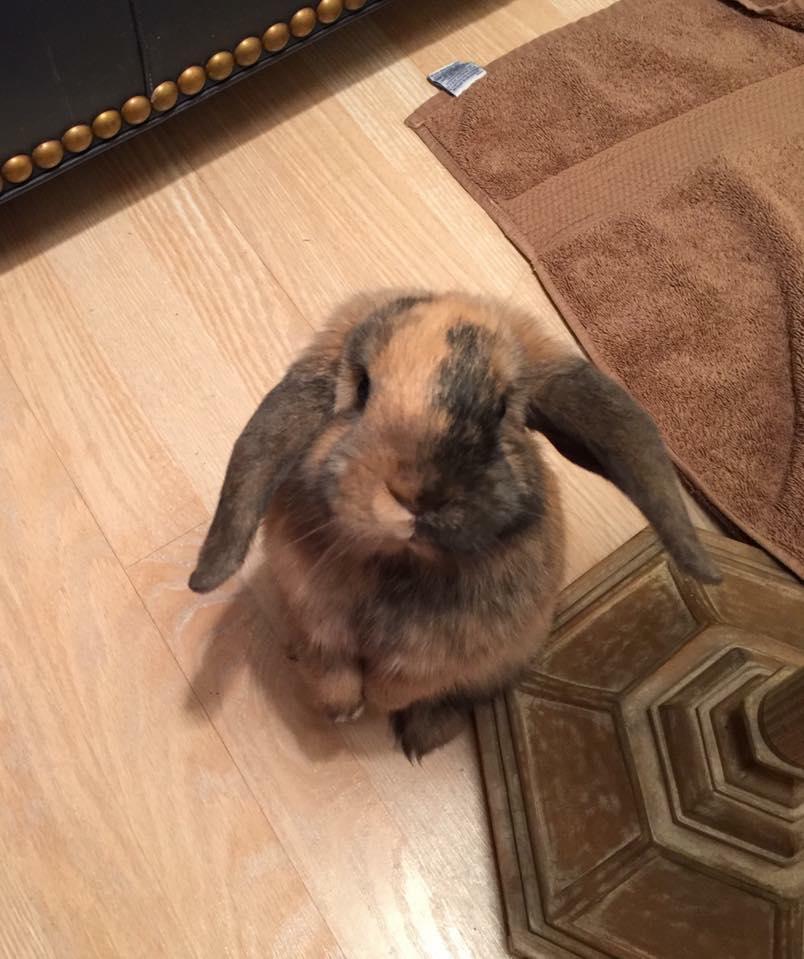 Rabbit_Looking_Up.jpg