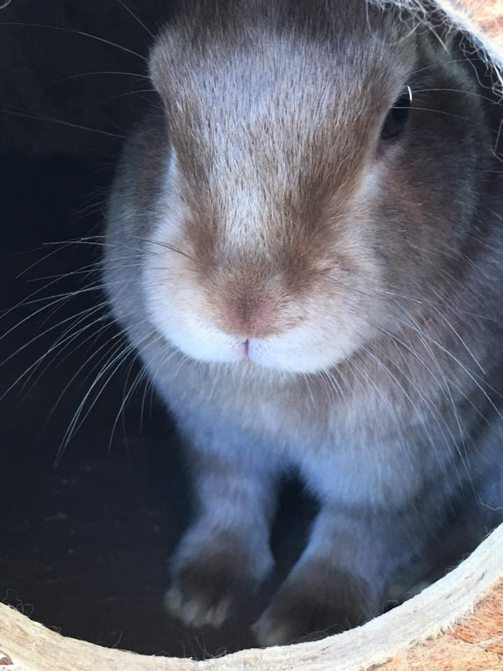 Rabbit_peaking_out.jpg