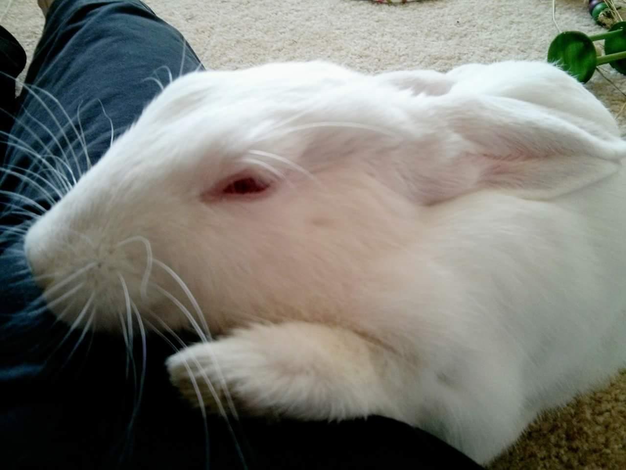 Rabbit_sleeping.jpg