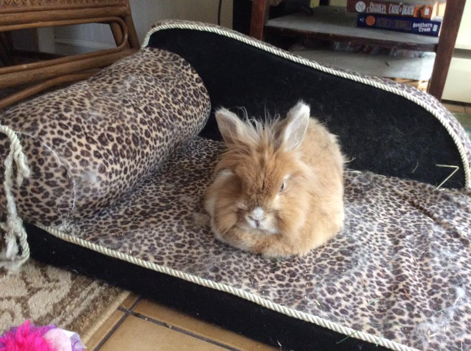 King_Rabbit.jpg