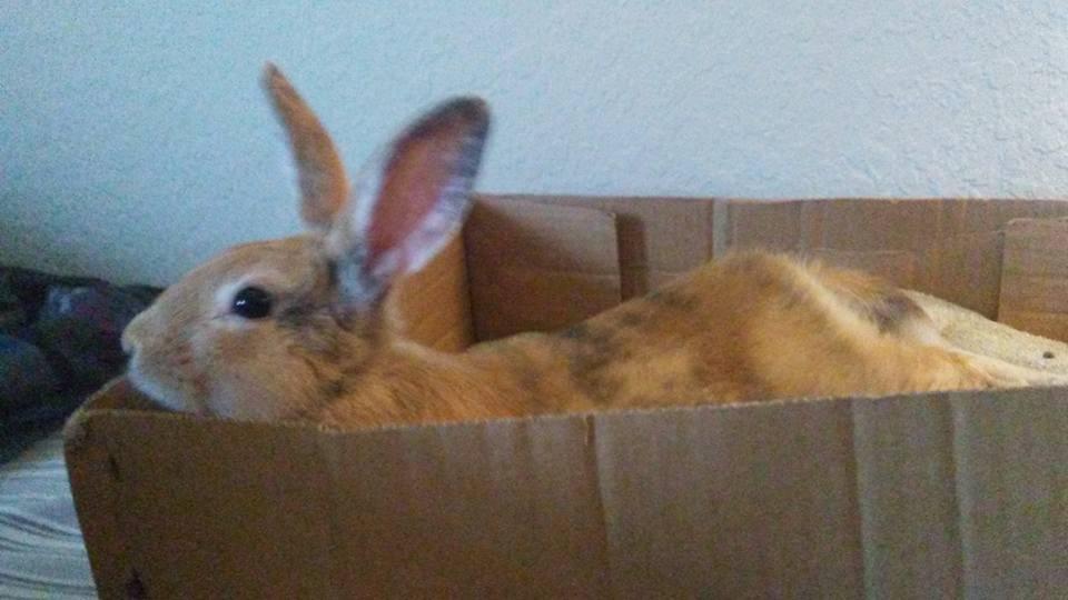 Lounging_Rabbit.jpg