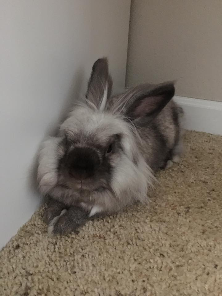Rabbit_Chilling.jpg