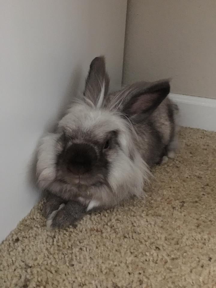 Rabbit_Chilling.jpg