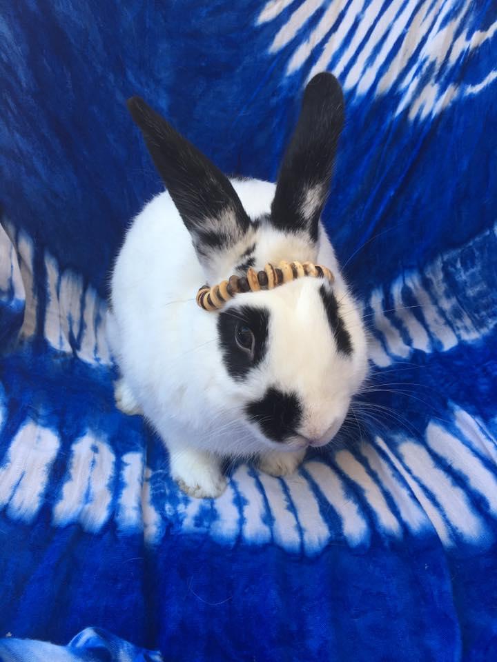 Rabbit_Peace_Maker.jpg