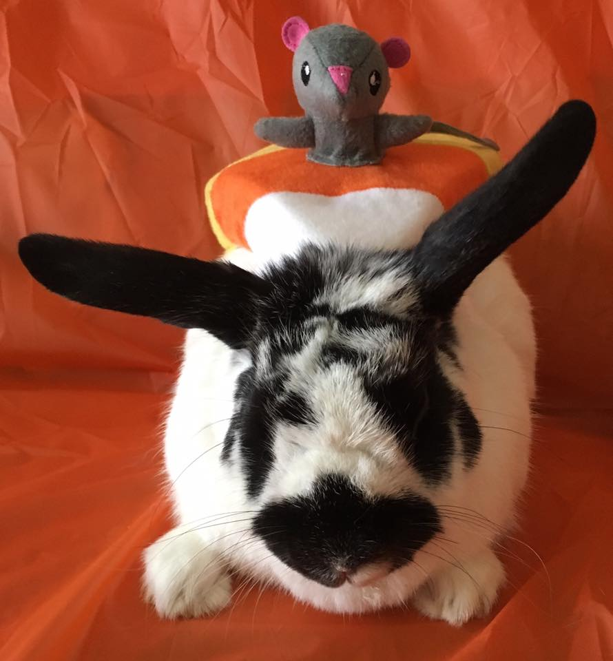 Rabbit_in_a_costume.jpg