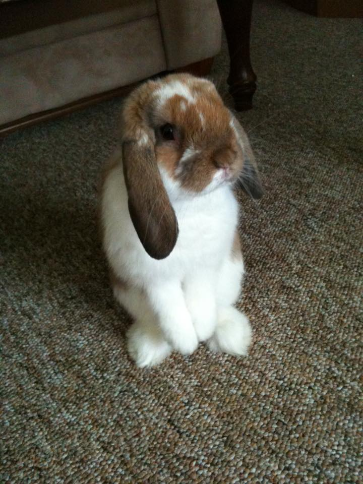 nosey_rabbit.jpg
