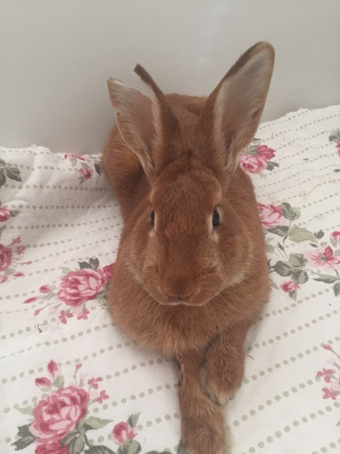 Partner With Us and Help Rabbits Live Happily Ever After In Arizona