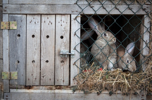 Stories From the Hutch: Is My Rabbit Allergic to Timothy Hay?